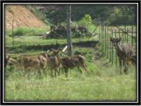 Taman Mini Haiwan